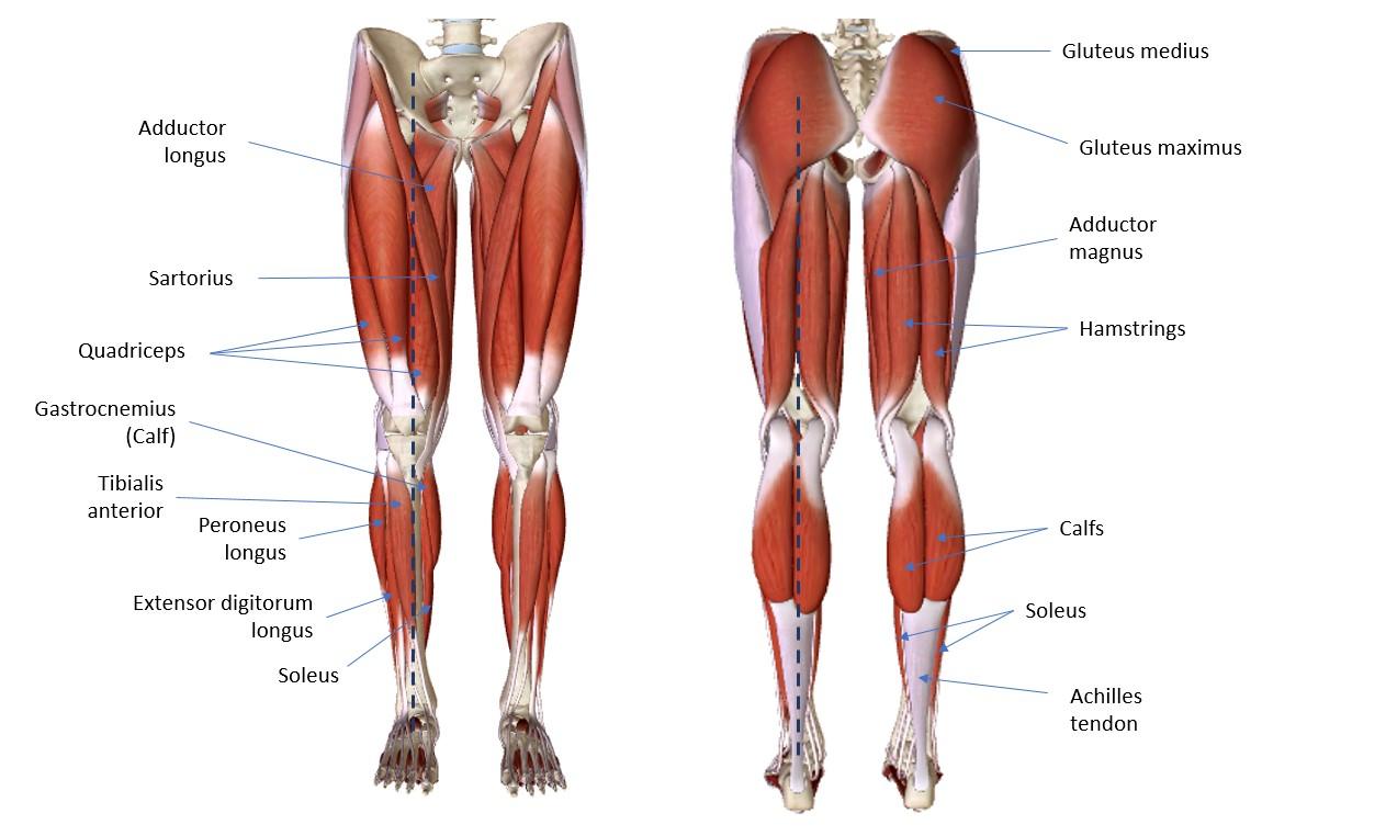 Lower Body Diagram Layout Wiring Diagrams
